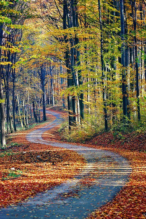 A Bükk ősszel