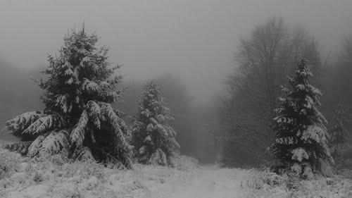 Ködös reggel a Bükk-fennsíkon