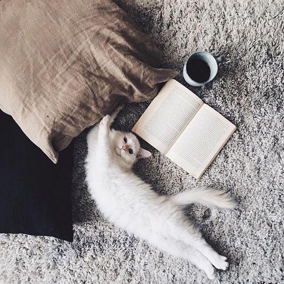 reggeli kávé cica